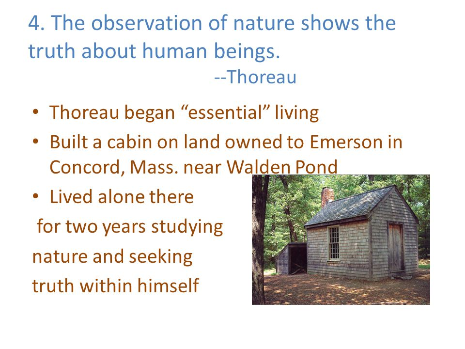 "4. The observation of nature shows the truth about human beings. --Thoreau Thoreau began ""essential"" living Built a cabin on land owned to Emerson in"