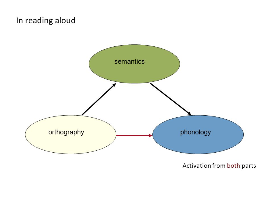 In reading aloud orthographyphonologysemantics Activation from both parts