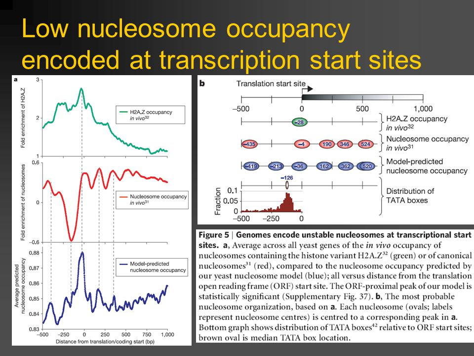 Low nucleosome occupancy encoded at transcription start sites