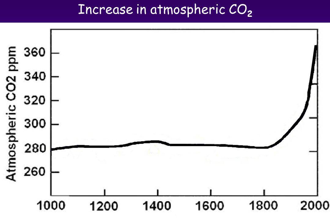 Increase in atmospheric CO 2