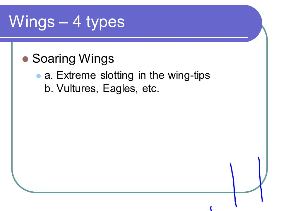 Wings – 4 types Soaring Wings a. Extreme slotting in the wing-tips b. Vultures, Eagles, etc.