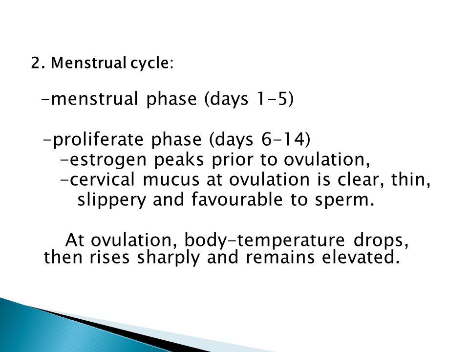 - secretory phase (days 15-26) oestrogen drops sharply and progesterone dominates.