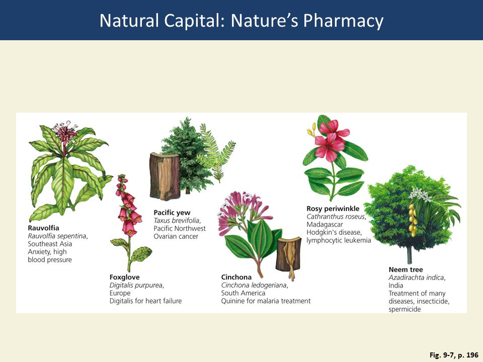 Fig. 9-7, p. 196 Natural Capital: Nature's Pharmacy