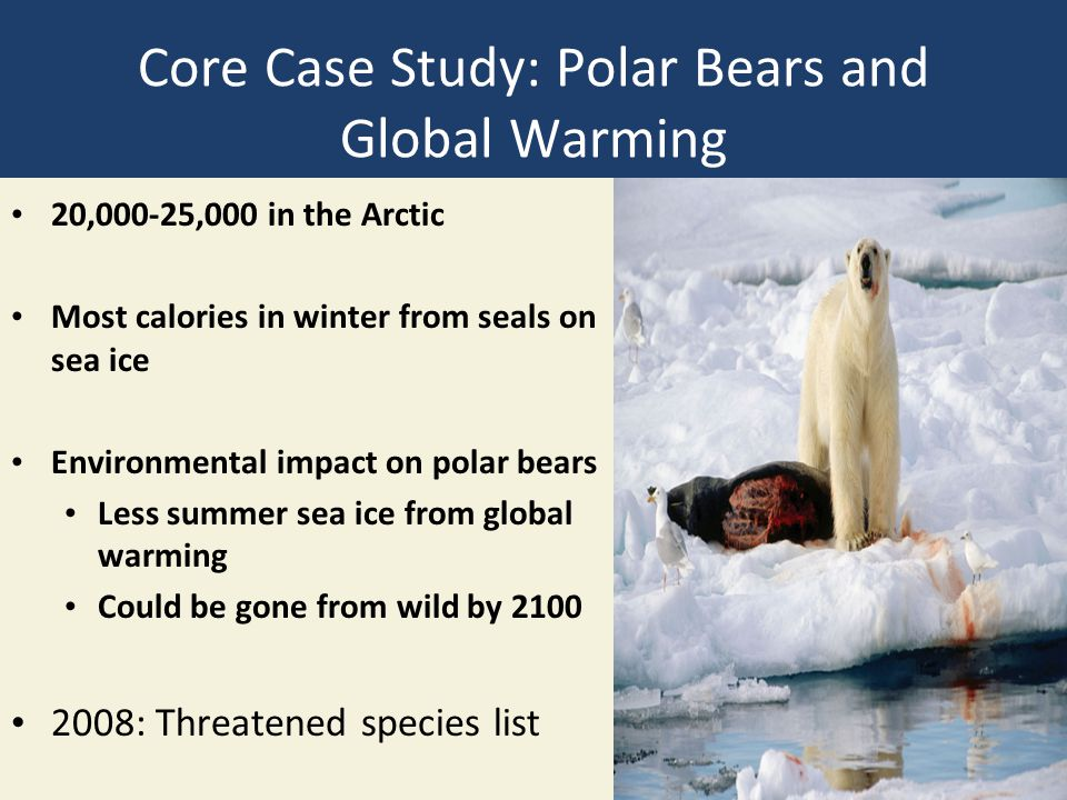 Core Case Study: Polar Bears and Global Warming 20,000-25,000 in the Arctic Most calories in winter from seals on sea ice Environmental impact on polar bears Less summer sea ice from global warming Could be gone from wild by 2100 2008: Threatened species list