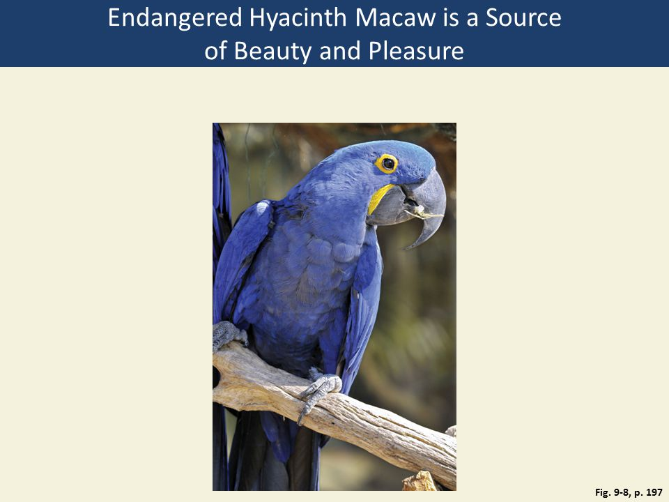 Fig. 9-8, p. 197 Endangered Hyacinth Macaw is a Source of Beauty and Pleasure