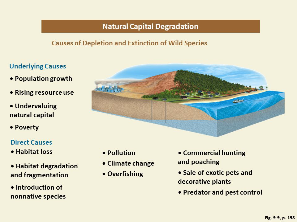 Fig. 9-9, p. 198 Natural Capital Degradation Causes of Depletion and Extinction of Wild Species Underlying Causes Population growth Rising resource us
