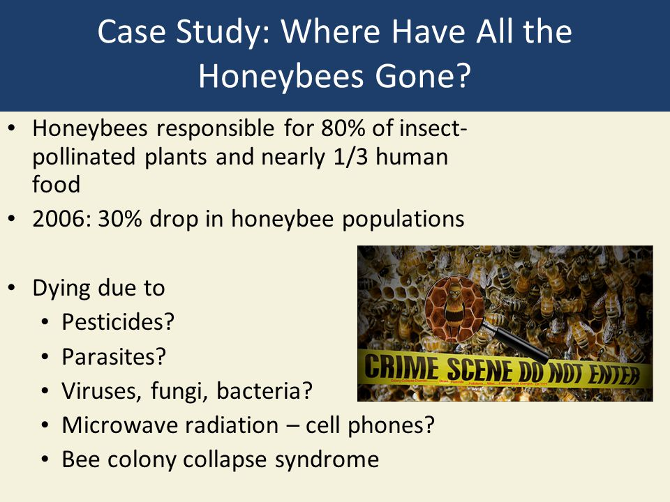 Case Study: Where Have All the Honeybees Gone.