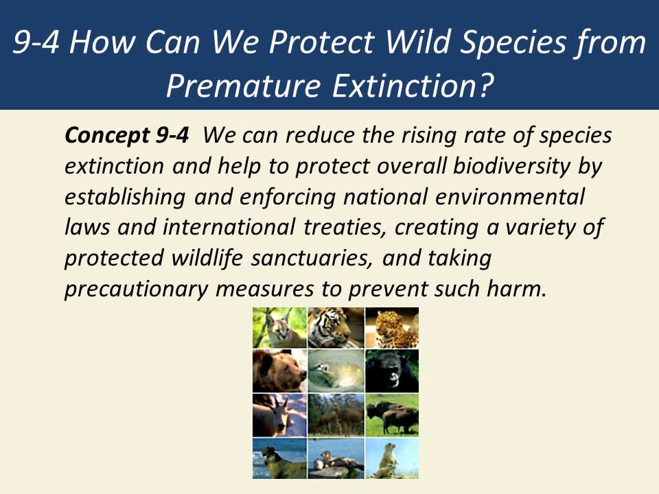 9-4 How Can We Protect Wild Species from Premature Extinction.