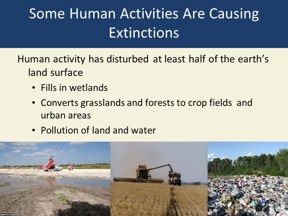 Some Human Activities Are Causing Extinctions Human activity has disturbed at least half of the earth's land surface Fills in wetlands Converts grasslands and forests to crop fields and urban areas Pollution of land and water