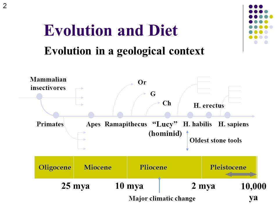 Evolution and Diet Evolution in a geological context OligoceneMiocenePliocenePleistocene 25 mya10 mya2 mya 10,000 ya Mammalian insectivores PrimatesApesRamapithecus Lucy (hominid) H.