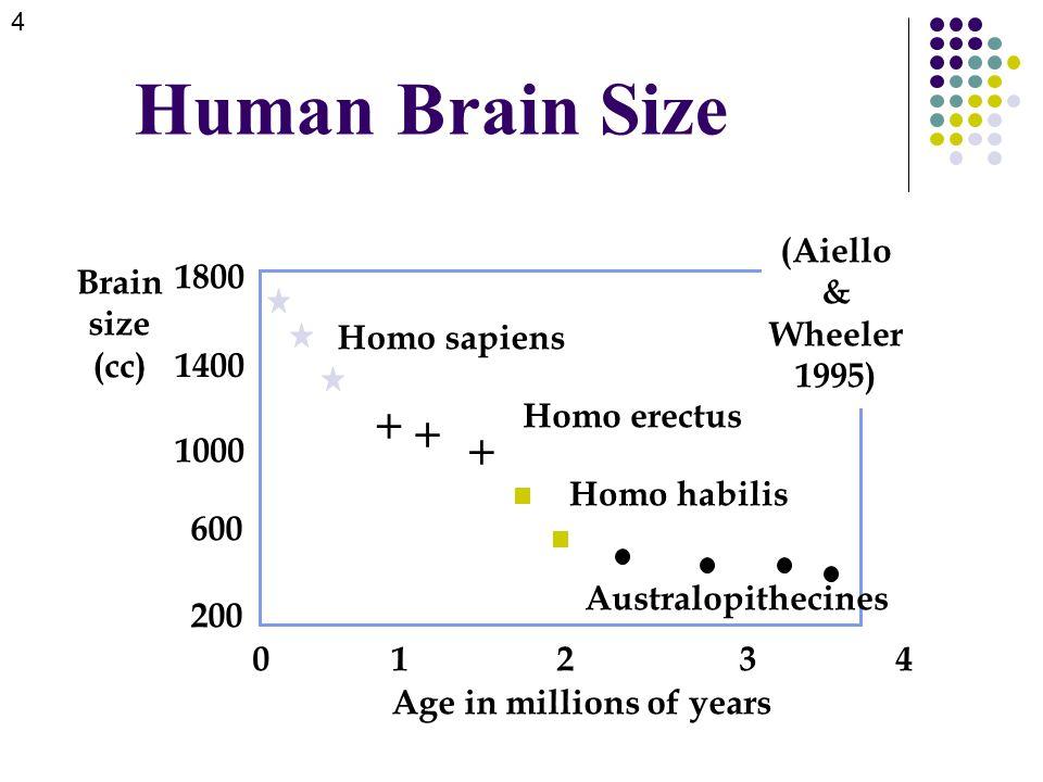 Human Brain Size Brain size (cc) 0 1 2 3 4 Age in millions of years 200 1800 1000 600 1400    Homo sapiens Homo erectus Homo habilis Australopithecines (Aiello & Wheeler 1995) 4