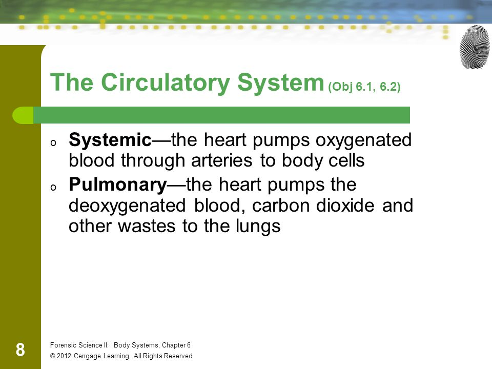 19 Forensic Science II: Body Systems, Chapter 6 © 2012 Cengage Learning.