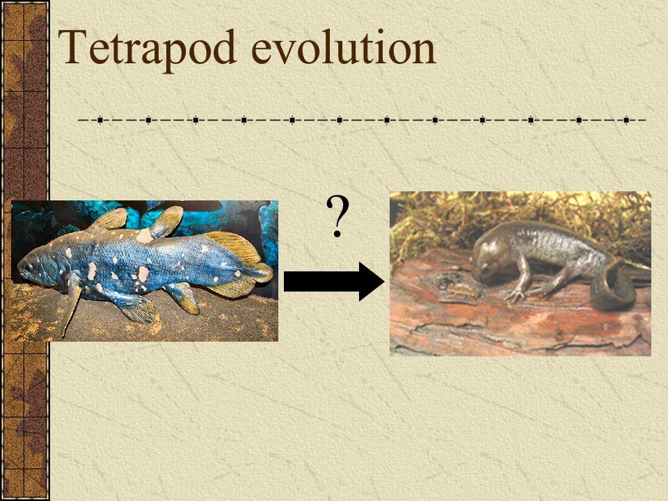Tetrapod evolution