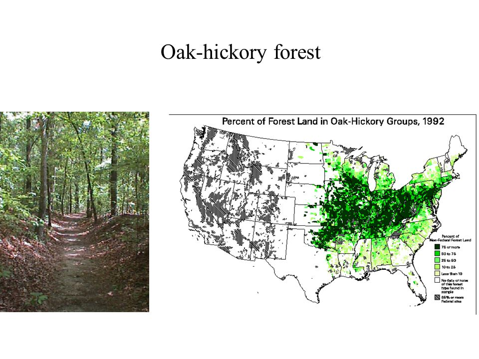 Oak-hickory forest