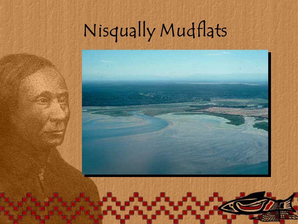 Nisqually Mudflats