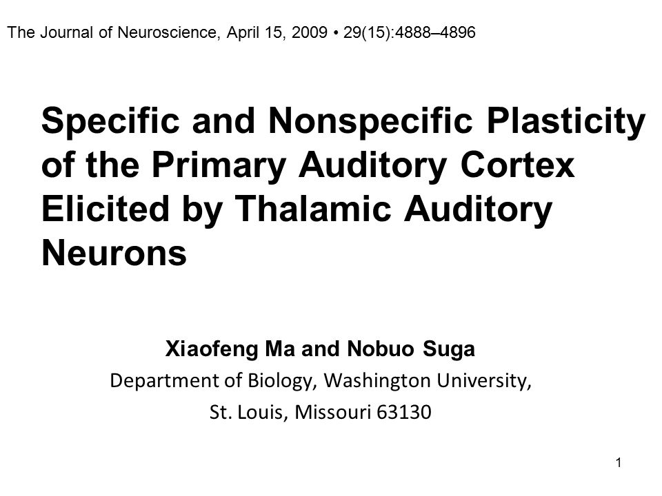 1 Specific and Nonspecific Plasticity of the Primary Auditory Cortex Elicited by Thalamic Auditory Neurons Xiaofeng Ma and Nobuo Suga Department of Biology, Washington University, St.