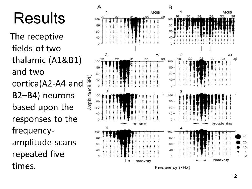12 The receptive fields of two thalamic (A1&B1) and two cortica(A2-A4 and B2–B4) neurons based upon the responses to the frequency- amplitude scans repeated five times.