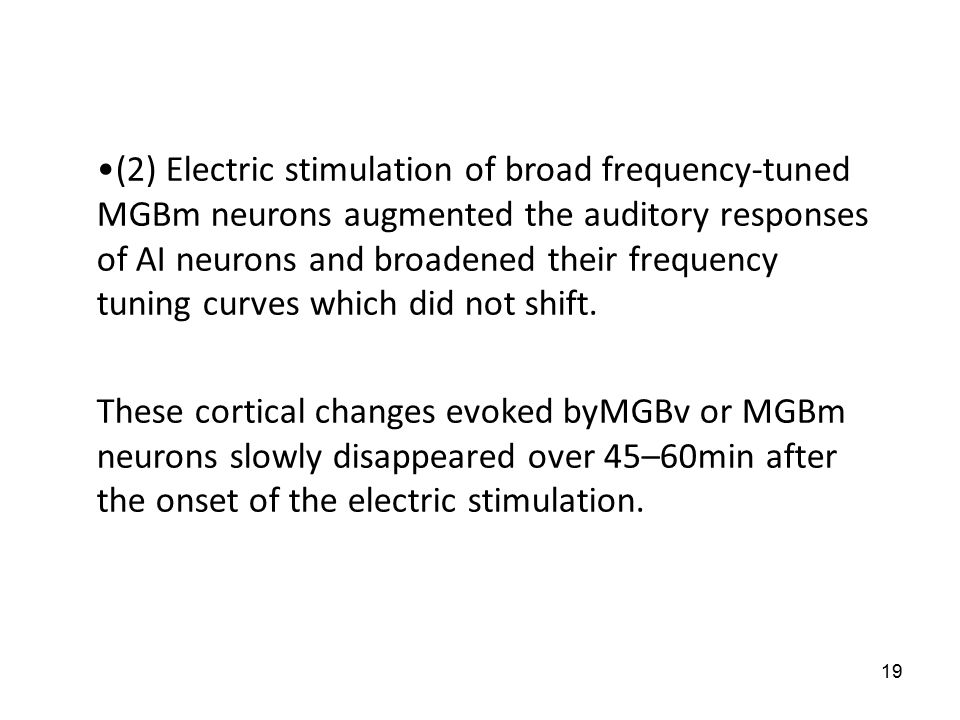 19 (2) Electric stimulation of broad frequency-tuned MGBm neurons augmented the auditory responses of AI neurons and broadened their frequency tuning curves which did not shift.
