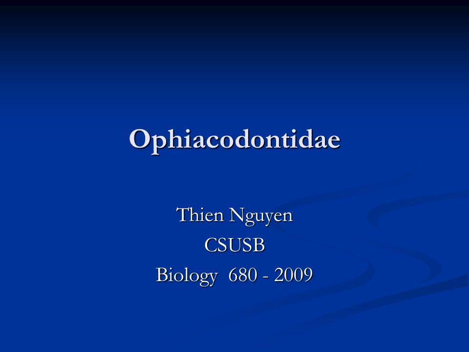 Ophiacodontidae Thien Nguyen CSUSB Biology 680 - 2009