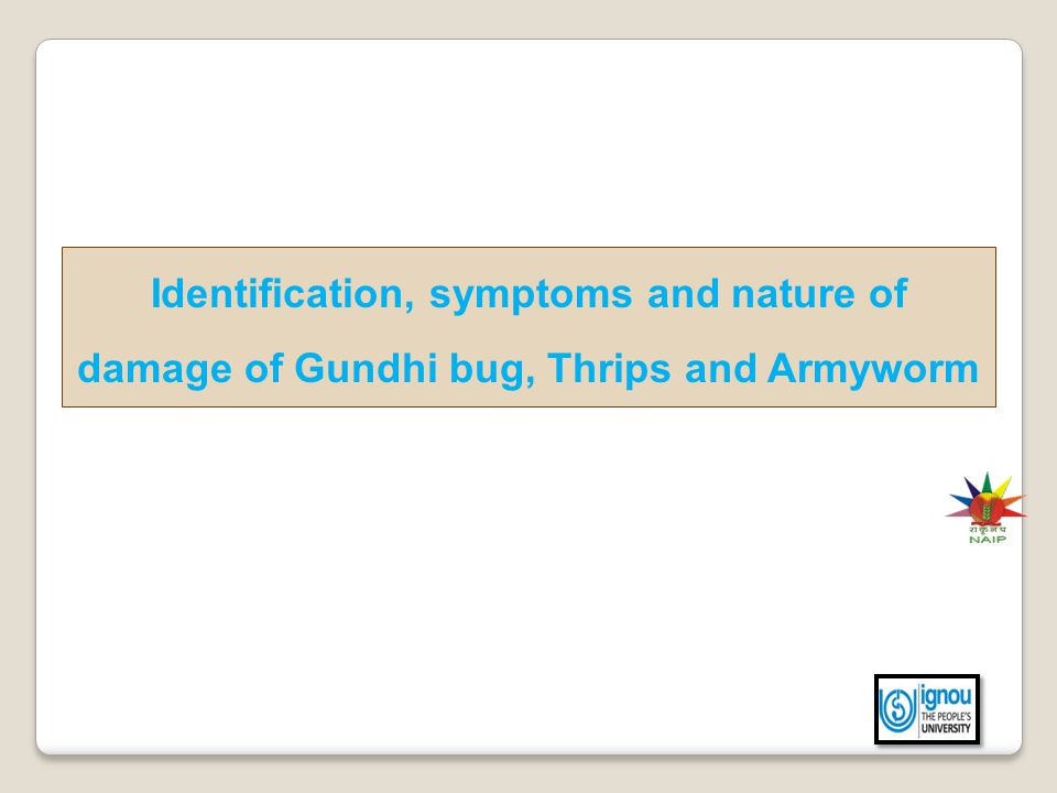 Identification, symptoms and nature of damage of Gundhi bug, Thrips and Armyworm