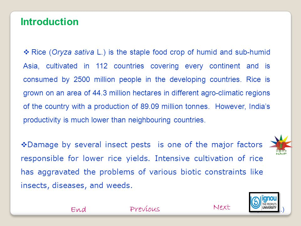  Rice gundhi bug, thrips and armyworm are important pests of rice and inflict heavy yield losses during certain years.