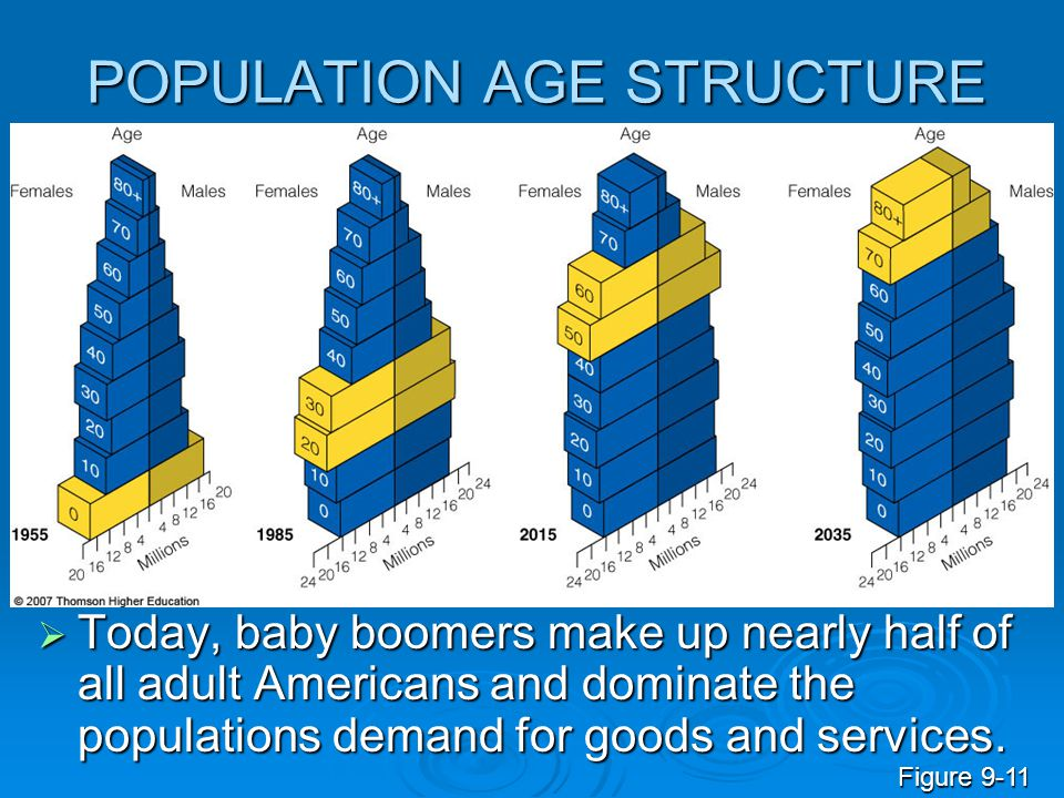 POPULATION AGE STRUCTURE  Today, baby boomers make up nearly half of all adult Americans and dominate the populations demand for goods and services.