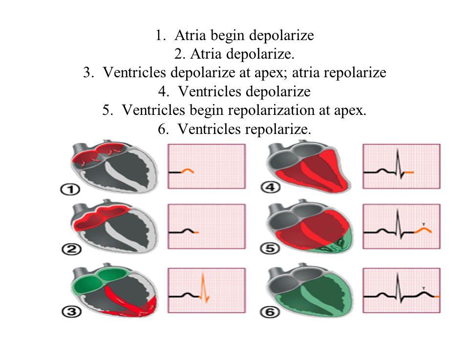 1. Atria begin depolarize 2. Atria depolarize. 3.