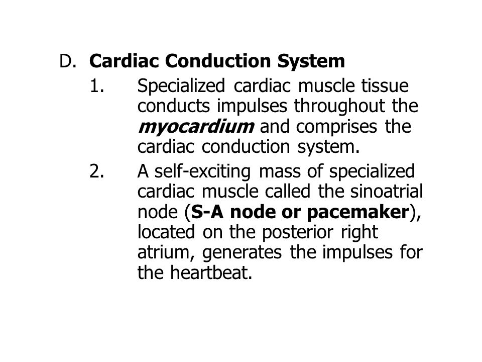 D.Cardiac Conduction System 1.Specialized cardiac muscle tissue conducts impulses throughout the myocardium and comprises the cardiac conduction system.