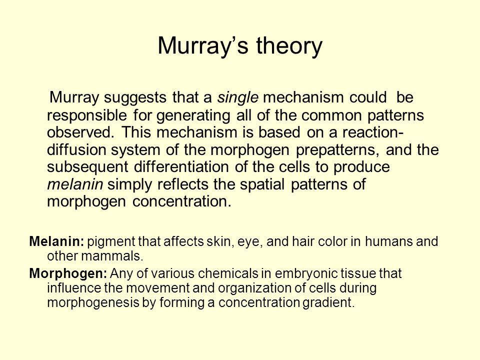 Murray's Theory (Cont.) The development of color pattern on the skin of mammal occurs towards the end of embryogenesis, but it may reflect an underlying pre-pattern that is laid down much earlier.