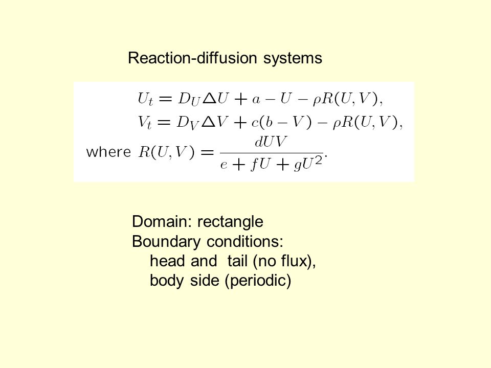 Reaction-diffusion systems Domain: rectangle Boundary conditions: head and tail (no flux), body side (periodic)