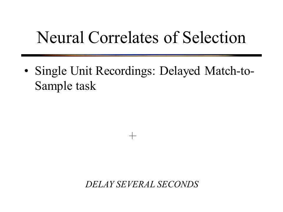 Neural Correlates of Selection Single Unit Recordings: Delayed Match-to- Sample task DELAY SEVERAL SECONDS