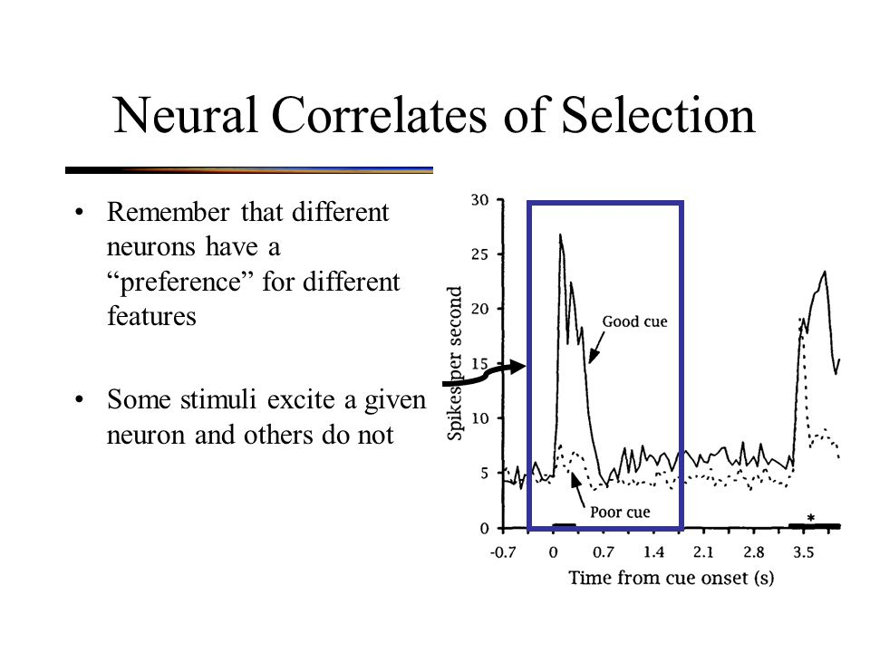 Neural Correlates of Selection Remember that different neurons have a preference for different features Some stimuli excite a given neuron and others do not