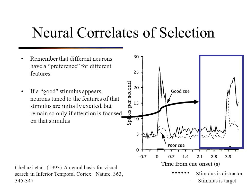 Neural Correlates of Selection Remember that different neurons have a preference for different features If a good stimulus appears, neurons tuned to the features of that stimulus are initially excited, but remain so only if attention is focused on that stimulus Chellazi et al.