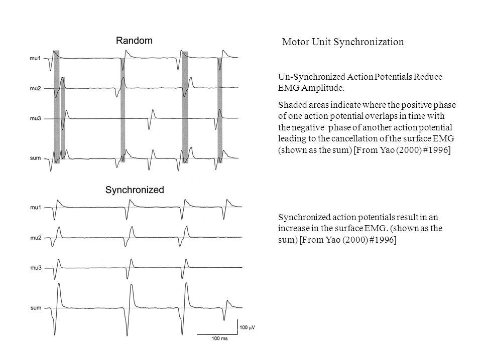 Effects of Motor Unit Synchronization Upon EMG Amplitude and Force Synchronization increases the EMG amplitude and the variability of the force.