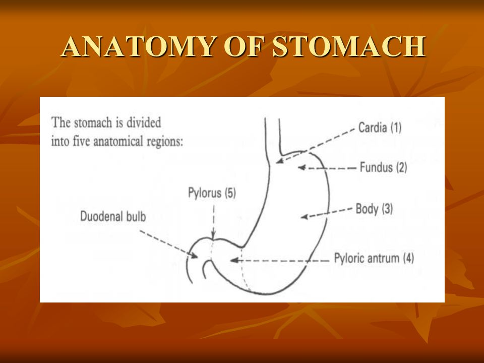 CONGENITAL DISORDERS OF STOMACH