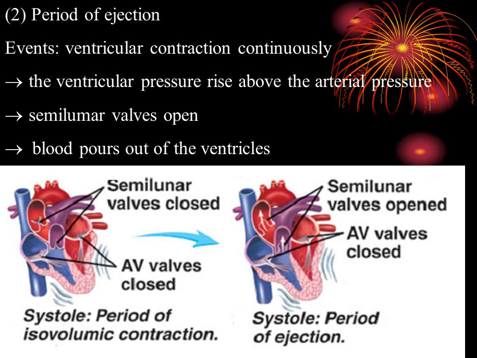 2 The Phases of the Cardiac Cycle (1)Period of isometric (isovolumetric or isovolumic) contraction Events: ventricular contraction  ventricular press