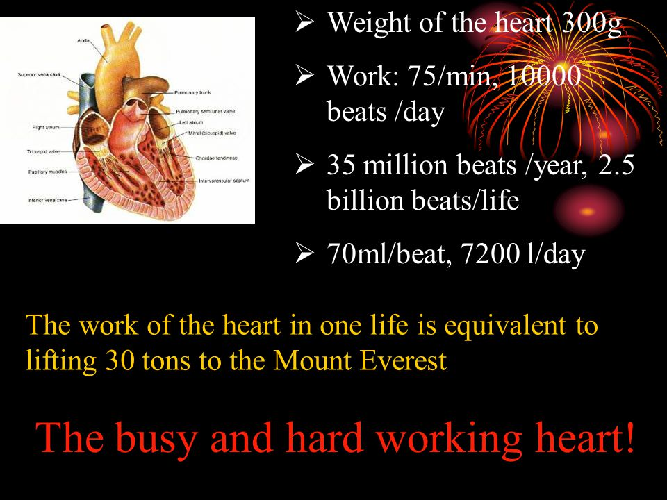 CHAPTER 4 THE CARDIOVASCULAR SYSTEM