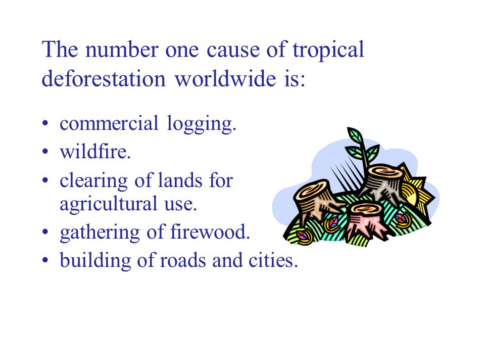 The number one cause of tropical deforestation worldwide is: commercial logging.