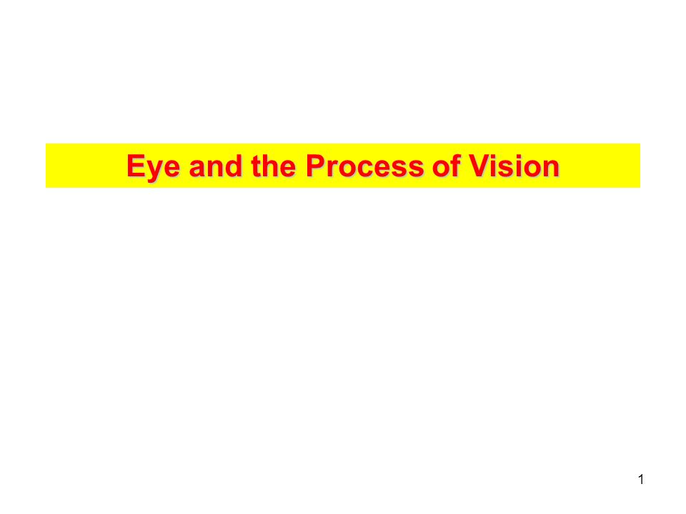 2 Eye and the process of vision VISION - 1.