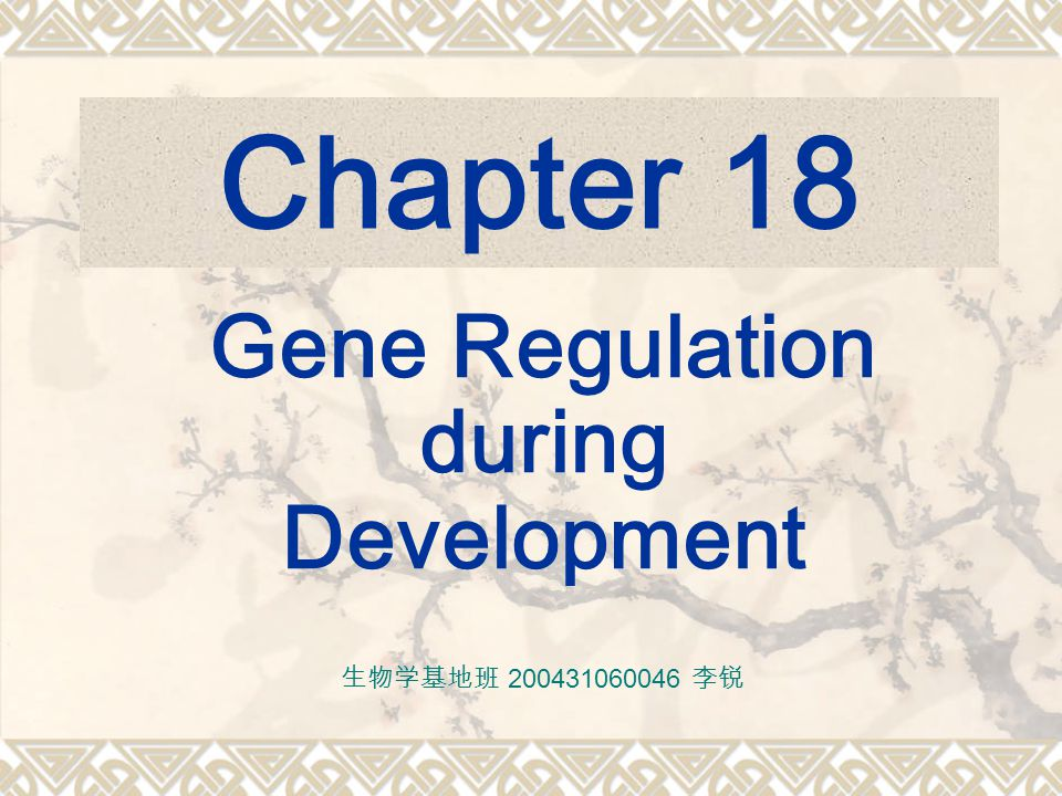 Chapter 18 Gene Regulation during Development 生物学基地班 200431060046 李锐