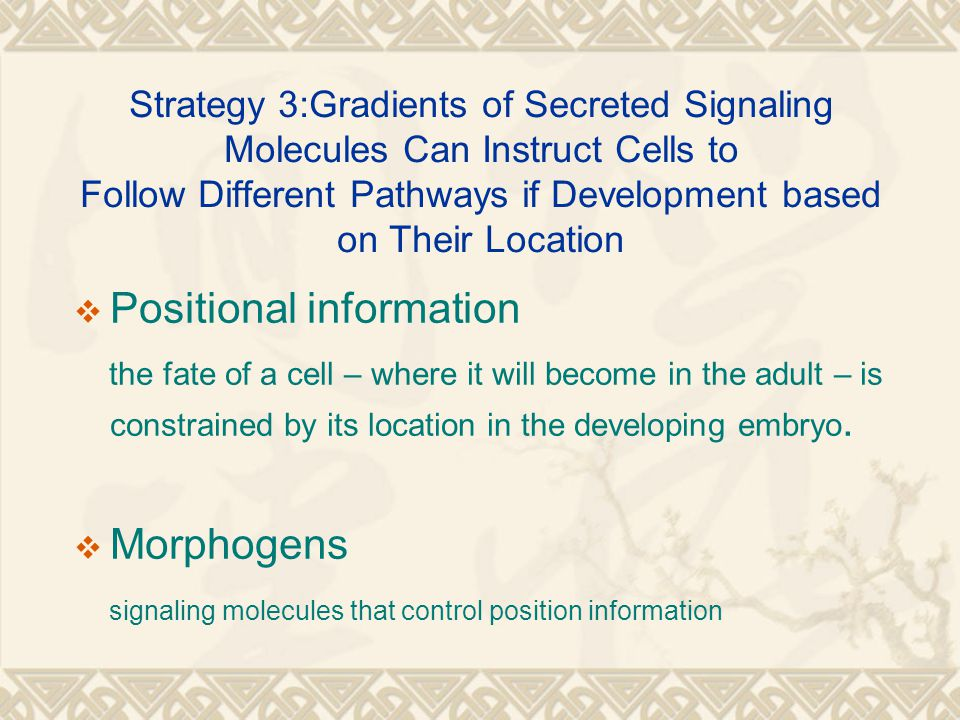 Strategy 3:Gradients of Secreted Signaling Molecules Can Instruct Cells to Follow Different Pathways if Development based on Their Location  Positional information the fate of a cell – where it will become in the adult – is constrained by its location in the developing embryo.