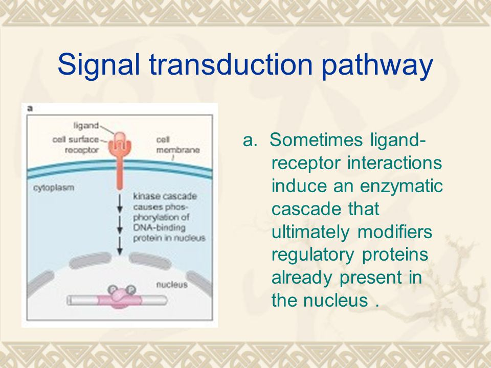 Signal transduction pathway a.