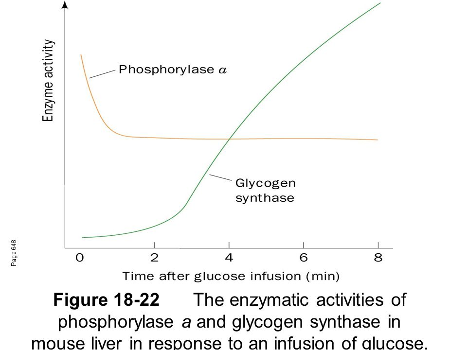 Figure 18-22The enzymatic activities of phosphorylase a and glycogen synthase in mouse liver in response to an infusion of glucose.