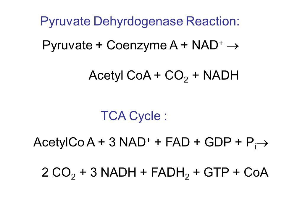 AcetylCo A + 3 NAD + + FAD + GDP + P i  2 CO 2 + 3 NADH + FADH 2 + GTP + CoA TCA Cycle : Pyruvate + Coenzyme A + NAD +  Acetyl CoA + CO 2 + NADH Pyruvate Dehyrdogenase Reaction: