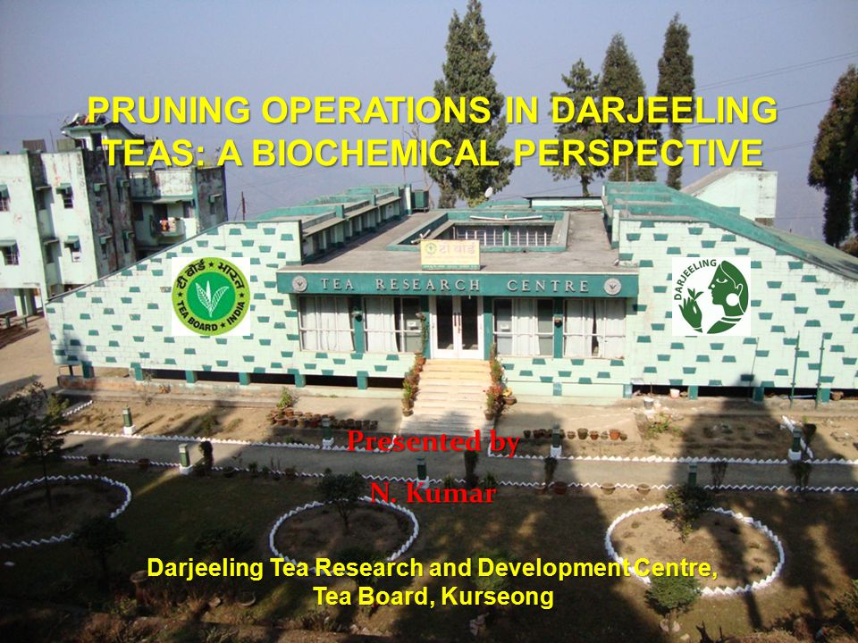 Darjeeling Tea Research and Development Centre, Tea Board, Kurseong PRUNING OPERATIONS IN DARJEELING TEAS: A BIOCHEMICAL PERSPECTIVE Presented by N.