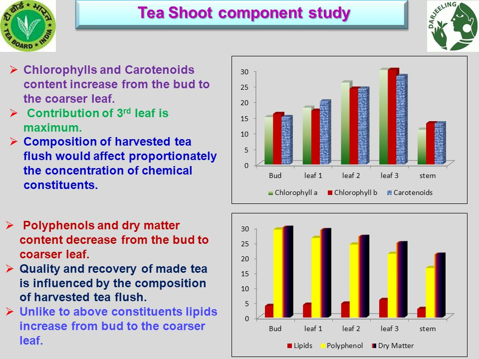 Tea Shoot component study Tea Shoot component study  Chlorophylls and Carotenoids content increase from the bud to the coarser leaf.