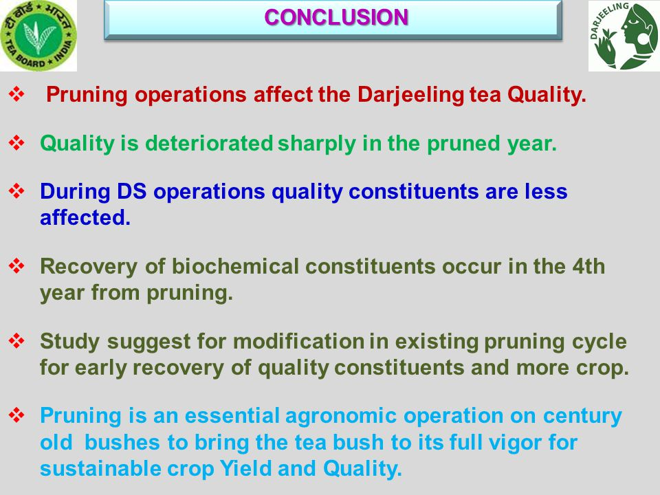 CONCLUSION CONCLUSION  Pruning operations affect the Darjeeling tea Quality.