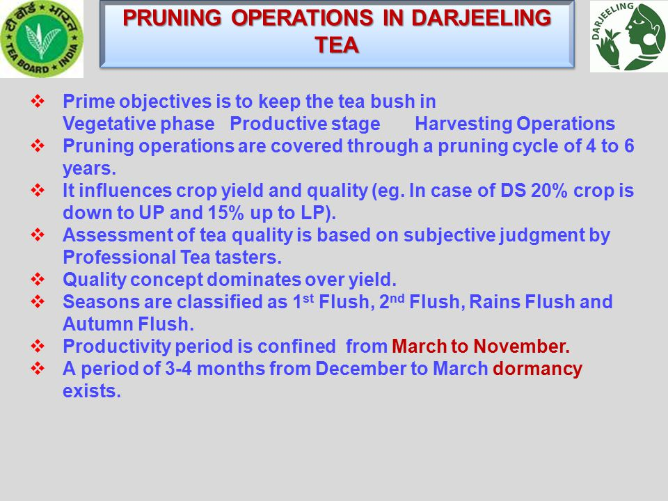 PRUNING OPERATIONS IN DARJEELING TEA  Prime objectives is to keep the tea bush in Vegetative phaseProductive stage Harvesting Operations  Pruning operations are covered through a pruning cycle of 4 to 6 years.