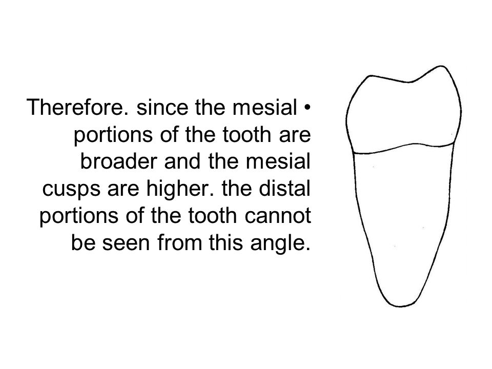 Therefore. since the mesial portions of the tooth are broader and the mesial cusps are higher. the distal portions of the tooth cannot be seen from th