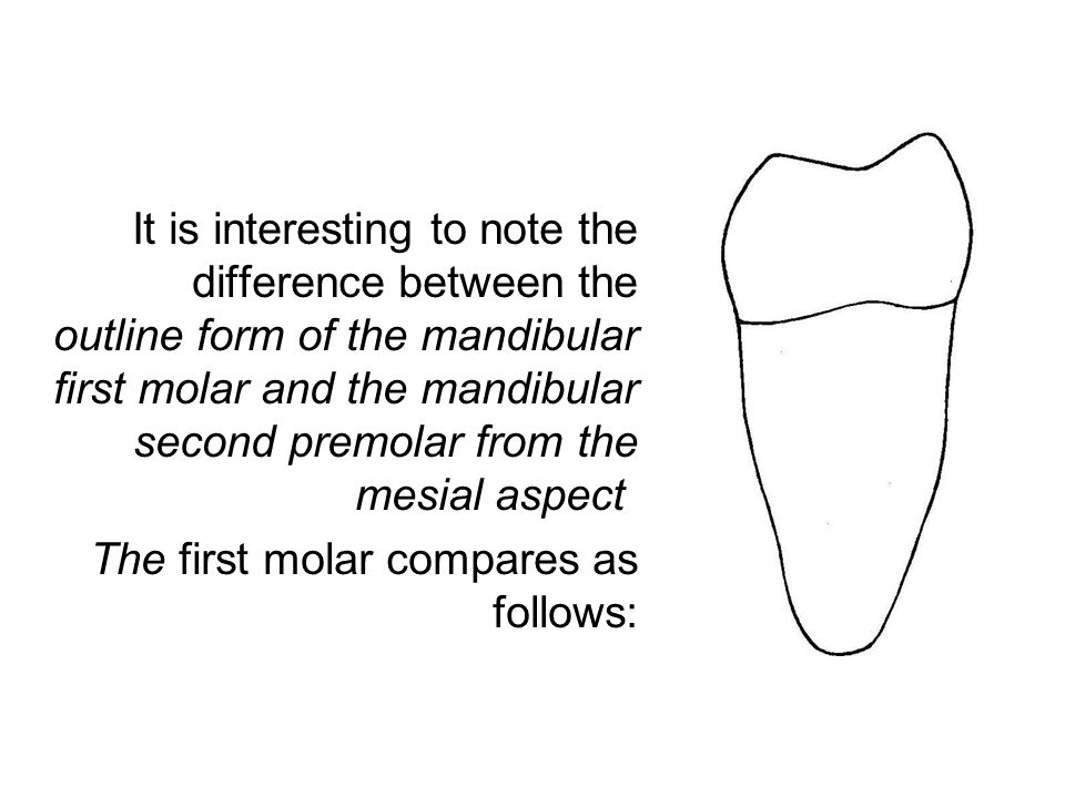 It is interesting to note the difference between the outline form of the mandibular first molar and the mandibular second premolar from the mesial asp